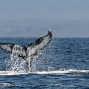 Where to Go Whale Watching in San Diego
